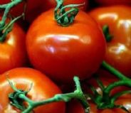 Tomato Harbinger - 120 seeds